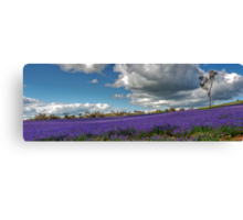The Colour Purple Canvas Print