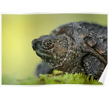 Baby Snapping Turtle close-up. Poster