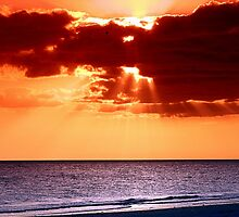 Rays of Florida Sunshine by DJ Florek