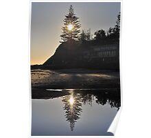 Norfolk Pine, 17-10-2010 Poster