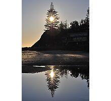 Norfolk Pine, 17-10-2010 Photographic Print