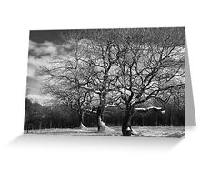 Winter trees in snow Greeting Card
