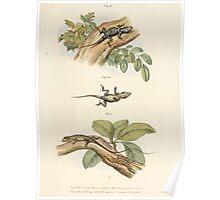 Leopold Joseph Fitzinger 1867 0039 Picture Atlas for popular scientific natural history of vertebrates Poster