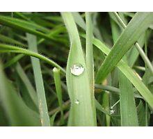 Rain drop on grass blade Photographic Print