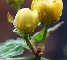 She looks like a flower, but she stings like a bee. by JessicaLisa