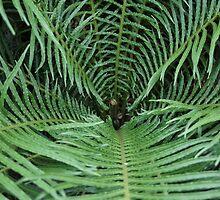 Fern Plant, DC Botanical Gardens by Lagoldberg28
