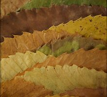 Leaf Landscape by Catherine Hadler