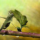 Is it still raining...? by jimmy hoffman