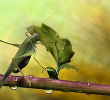 Is it still raining...? by jimmy hoffman