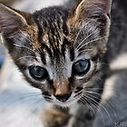Cat with beautiful EYES by Yevgen Romanenko