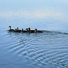 Duck Family Evening Swim by Barberelli