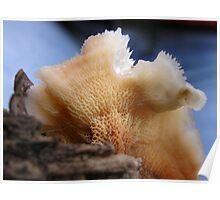 Phlebia Skin Poster