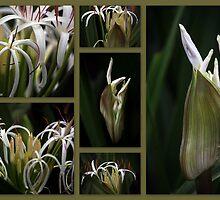 Some kind of Wonderful....Crinum pedunculatum by Magee