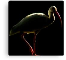 Avian Profile ~ Part 5 Canvas Print