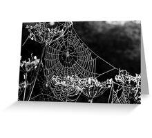 Dewy spiders' webs Greeting Card