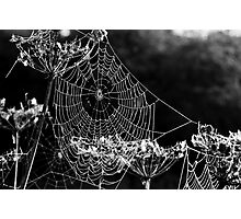 Dewy spiders' webs Photographic Print