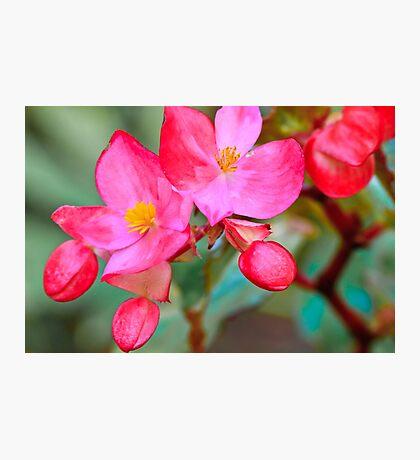 Red Flower Macro Photographic Print
