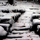 Early Snowfall in Dunrobin, Ontario by Debbie Pinard