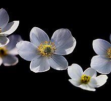 Floating Flowers by Debbie Pinard