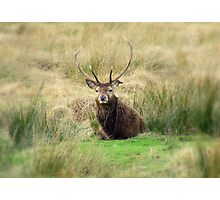 Stag - Glencoe, Scotland  Photographic Print