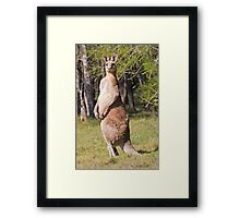The Boss - Alpha Male Framed Print