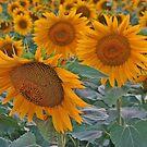 Summer beauty! by rasim1