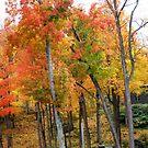 Colorful Forest by Esperanza Gallego