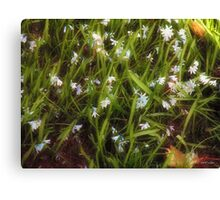 Patch of Spring Canvas Print