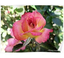 Sweet Temptations - Rose Poster