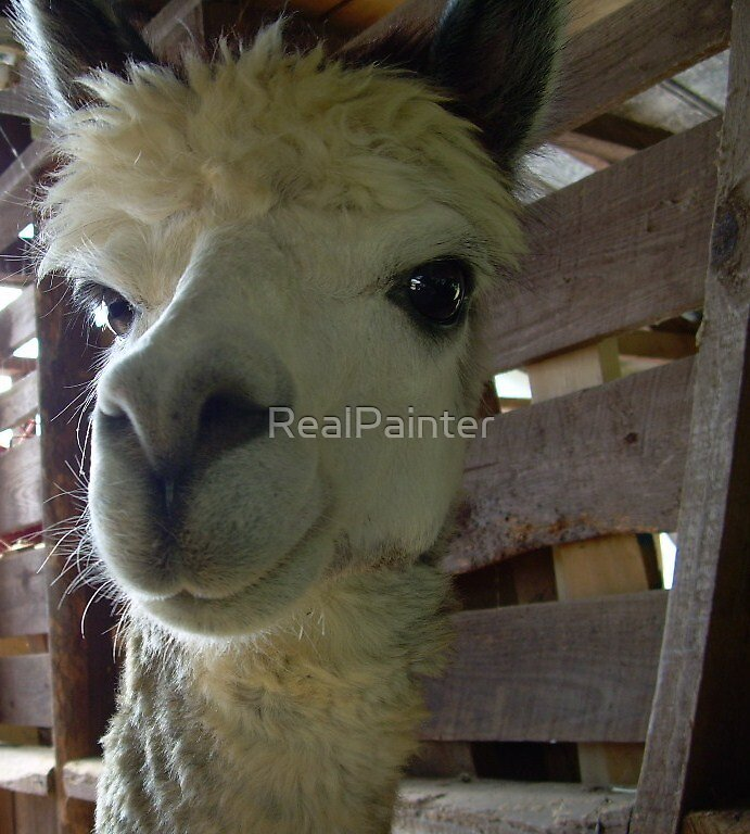 Pawque (Pah-Coo) Alpaca by RealPainter