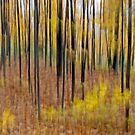 Photograph - Fall Forest in Dunrobin by Debbie Pinard