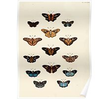 Exotic butterflies of the three parts of the world Pieter Cramer and Caspar Stoll 1782 V4 0427 Poster