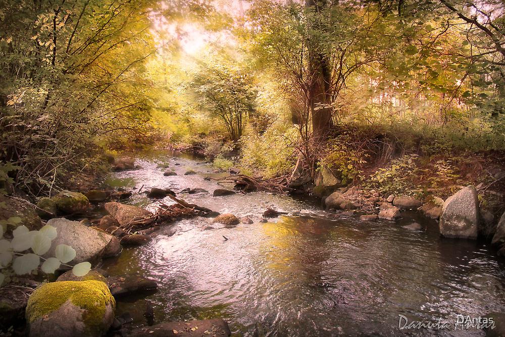 EL Paradiso by Danuta Antas