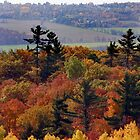 Fall in the Gatineaus - Overlooking Ottawa by Debbie Pinard