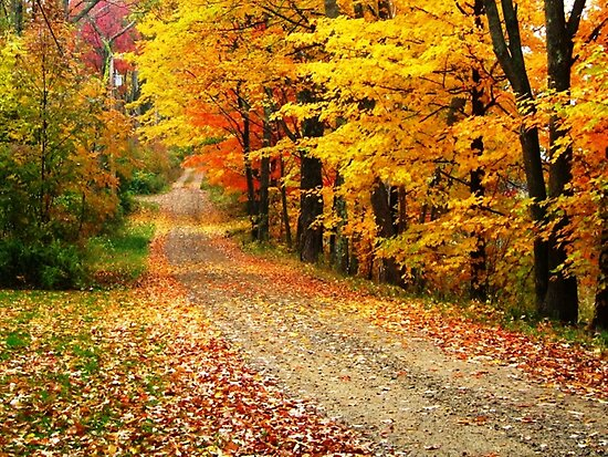 The Country Road by Esperanza Gallego
