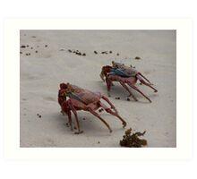Scurrying Galapagos Crabs Art Print