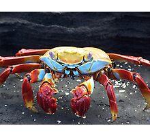 Galapagos Crab Photographic Print