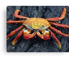 Galapagos Crab Canvas Print