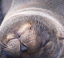 Galapagos Seal by Nina Brandin