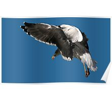 Great Black Backed Gull Poster