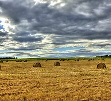 Rolling the Wheat Hay by Gary Smith
