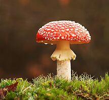Amanita muscaria by Glynn May