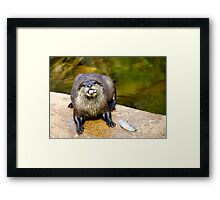 Otter  (Aonyx cinerea), touch that fish??? see these teeth, Framed Print