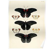 Exotic butterflies of the three parts of the world Pieter Cramer and Caspar Stoll 1782 V1 0385 Poster