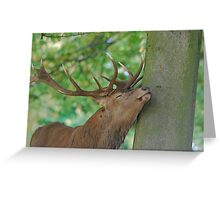 I Love It When You Do That! Greeting Card