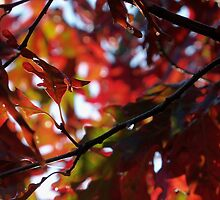 Autumn Oak  by Michele Markley