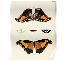 Exotic butterflies of the three parts of the world Pieter Cramer and Caspar Stoll 1782 V1 0260 Poster