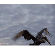 Galapagos Pelican Photographic Print