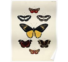 Exotic butterflies of the three parts of the world Pieter Cramer and Caspar Stoll 1782 V3 0104 Poster