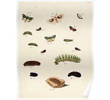 Exotic butterflies of the three parts of the world Pieter Cramer and Caspar Stoll 1782 Supplement 0117 Poster